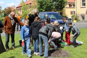 Baumpflanzung_6