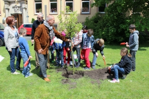 Baumpflanzung_9